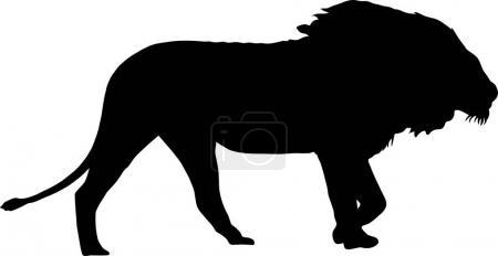 Silhouette of a walking male lion