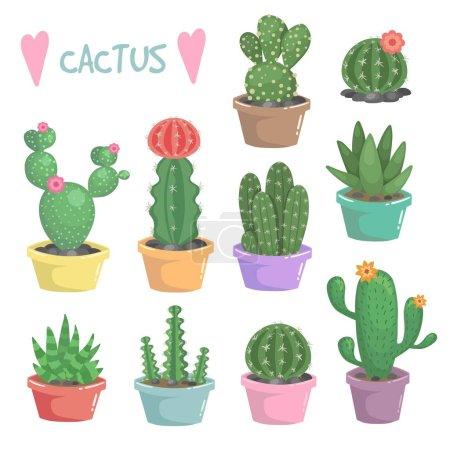 Cactus illustration. Exotic houseplant