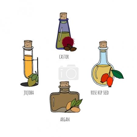 Illustration for Set of hand drawn bottles with different natural oils. Isolated on white. Great for body care, healthy life, relax concept design. - Royalty Free Image