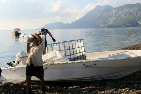 Photo for CIRALI, TURKEY - CIRCA SEPTEMBER 2013:workers unload fish from a boat - Royalty Free Image