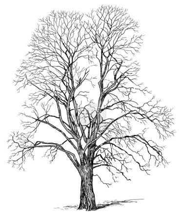 Skizze eines Baumes im Winter