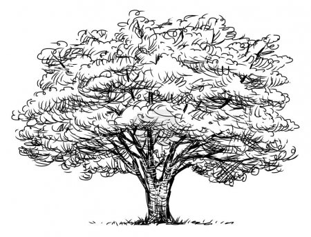 Skizze eines Laubbäumchens