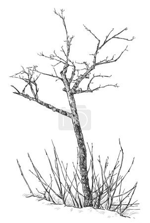 Hand-drawing of an young tree