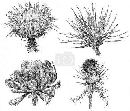 Sketches of the wild flowers.