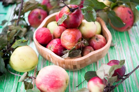 Photo for Fresh garden organic apples - Royalty Free Image