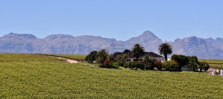 Wine Farm and Hottentots Holland Mountains