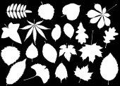 tree leaves set