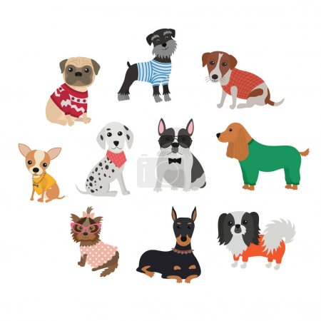 Set of different breeds of dogs in clothing and accessories