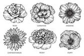 Collection of flowers drawing and sketch with line-art