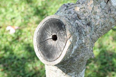 Photo pour Coupé de tronc d'arbre avec son ensemble et craquement - image libre de droit