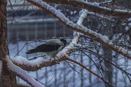 Photo pour Bird on winter tree branch - image libre de droit