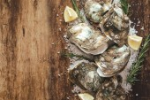 Half dozen fresh oysters on the wooden and sea salt. Top view with copy space
