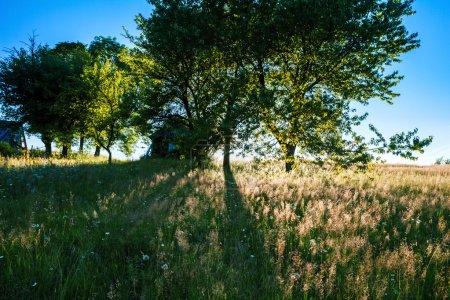 Beautiful field in sunshine. Rural house background.