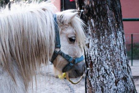 white Pony head