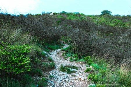 Foto de Camino mágico bosque oscuro - Imagen libre de derechos