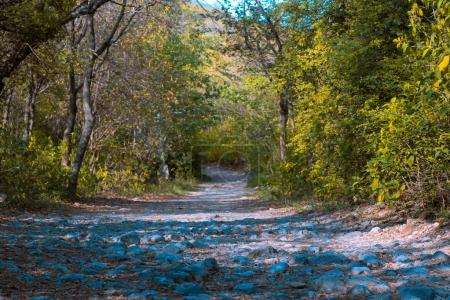 Foto de Sendero a través del bosque entre árboles en día soleado - Imagen libre de derechos