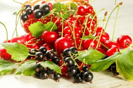 Fresh berries of cherry, red currant and black currant