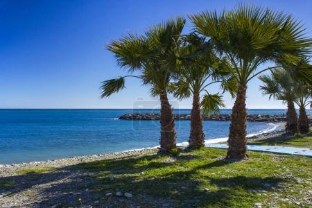 Photo pour Palmiers sur une plage à Almunecar, région Andalousie, Costa del Sol, Espagne - image libre de droit