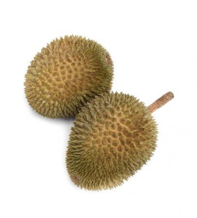 durian with shell, King of fruit on white background.