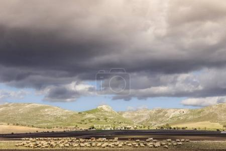 Autumn rural landscape: Alta Murgia National Park,Italy. Hilly countryside  dominated by clouds:flock of sheep grazing on an abandoned railway.It's home to Italys last example of Mediterranean steppe.