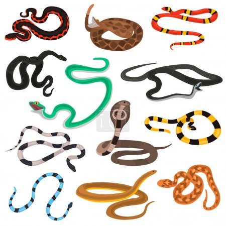 Different poison snakes color flat icons set...