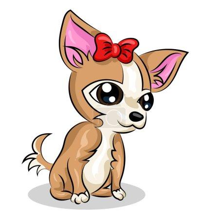 chihuahua funny small dog