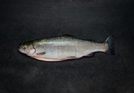 Fresh Trout Fish on Dark Background