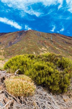 Teide National Park landscape