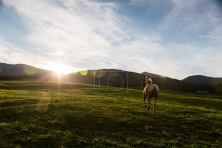 View of a running horse in the Slovakian region Orava