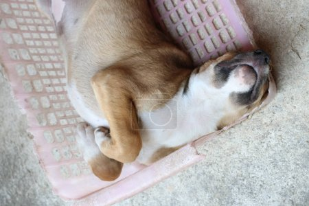 Photo pour Petit chien chiot dormant dans un vieux panier rose sur le sol en ciment - image libre de droit