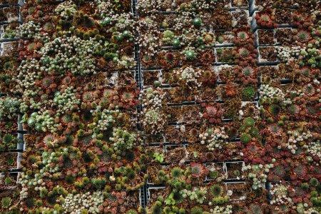 flesh succulents wall