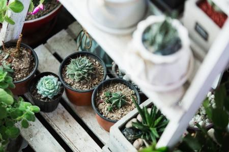 Small cactuses and succulents