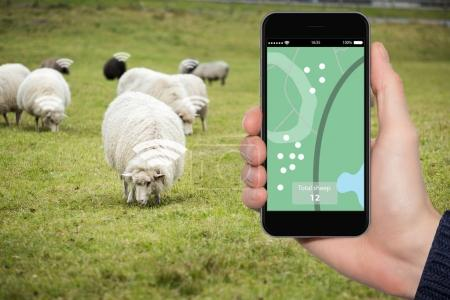 Sheep tracking monitoring in smart farm.