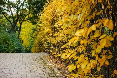 row of autumn bushes on street