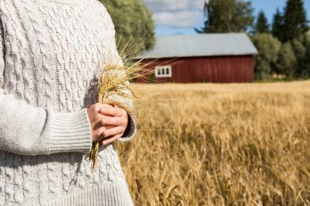 Farmer with branches of wheat