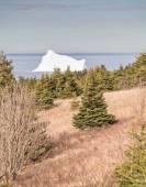 Iceberg and Coniferous Trees Portrait