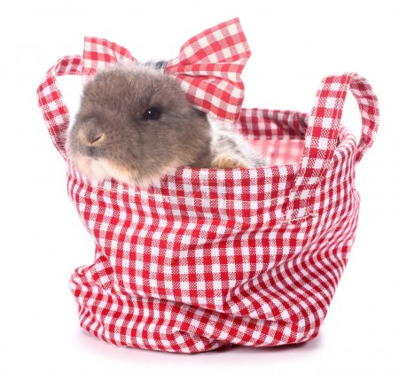 Photo for Little bunny in plaid bag - Royalty Free Image
