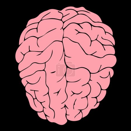 Brain vector Brain illustration Brain