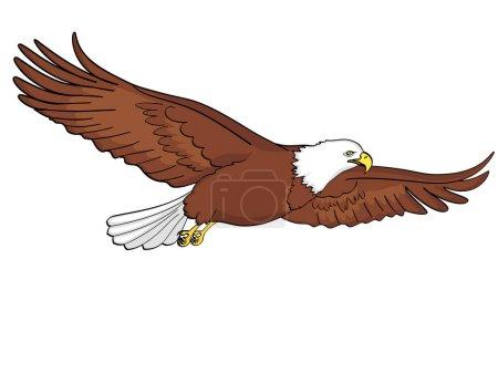 Illustration pour Contexte aigle oiseau, faucon. Illustration vectorielle. objet isolé sur fond blanc - image libre de droit
