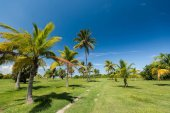 Hot summer sunny day in Cuba. Park with the palm trees growing on a green grass area near walking path