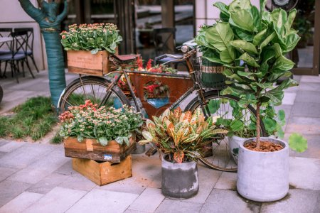 House plants in wooden box at street market outdoors