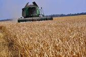 Harvesting of barley in agricultural farm POLIVTSI