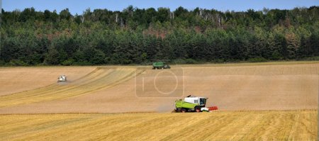 Photo pour Les moissonneuses-batteuses dans les champs récoltent les récoltes de blé mûr - image libre de droit