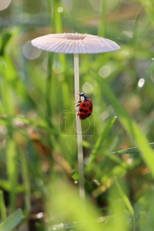 Ladybird comes after the stem to the top of the