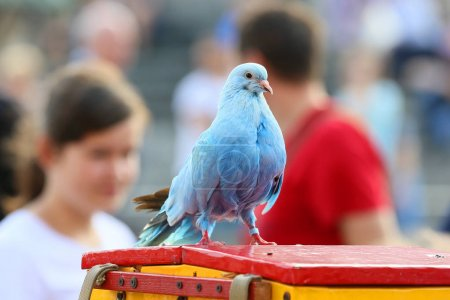 Shows the colored pigeons in Warsaw, Poland .