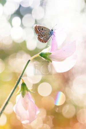 Beautiful butterfly in my garden sits on various flowers
