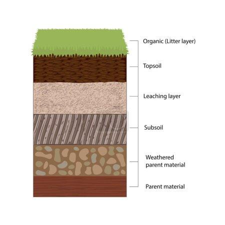 Illustration for Soil horizons are distinct layers of soil. Vector illustration flat design - Royalty Free Image