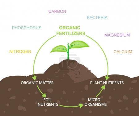 Diagram of nutrients in organic fertilizers. Vecto...