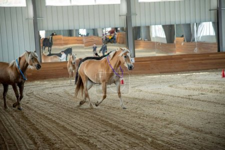 horses running in barn