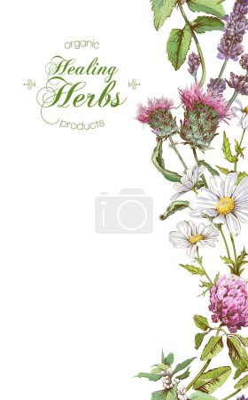 Illustration for Vector vertical wild flowers and herbs banner. Design for herbal tea, natural cosmetics, honey, perfume, health care products, homeopathy, aromatherapy. With place for text - Royalty Free Image
